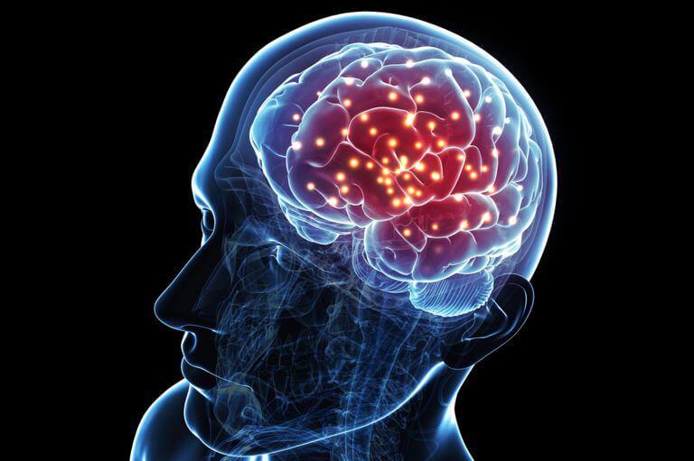 Hvad sker der i din hjerne, når du gambler?